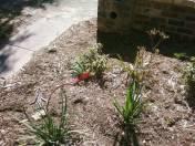 Viv's garden - part of